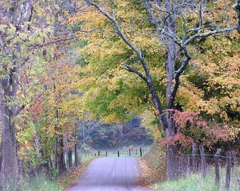 Autumn Country Road 4x6 Fall Foliage in Ohio Landscape Art Leaves Photography Home Decor Photo