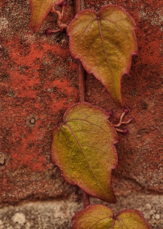 Autumn Decor, Fall Photography, Red, Green, Orange, Autumn Photography, Fall Nature Photograph, 5x7, Rustic Wall Decor, Fine Art Photography