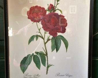 Large Vintage Botanical Print, Red Rose, Redoute Print, 1950s, Floral Still Life, Botanical Illustration, Flower Print
