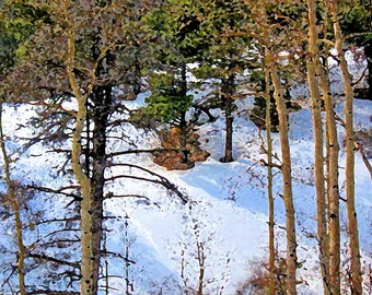 Scenic Winter Aspens In Snow Limited Edition Print
