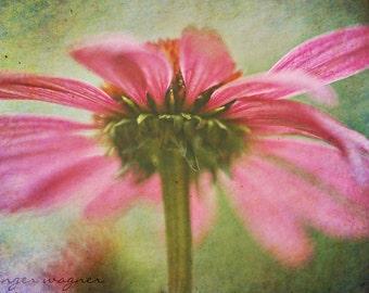 Blume Makrofotografie - Rainbow Echinacea - 10 x 14 Fine Art Print - Rosa Sonnenhut grün bunt surreal Wand Kunst Wohnkultur