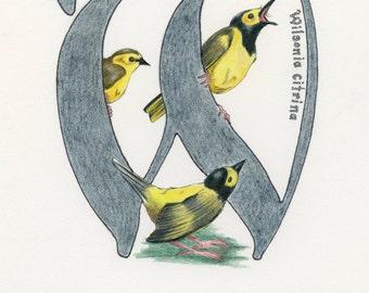 Avian Alphabet W