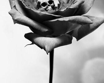 Remorse 2 FREE SHIPPING Surreal photo print Black & White Fine Art Still Life Gray Skull Bone Rose Flower Skeleton Death Creepy Dark Light