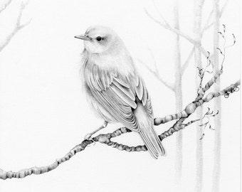 Bird Drawing Giclee Fine Art Print of my Wanderlust Pencil Drawing Bird Artwork Minimalist Bird Pencil Drawing Illustration Bird Art Print