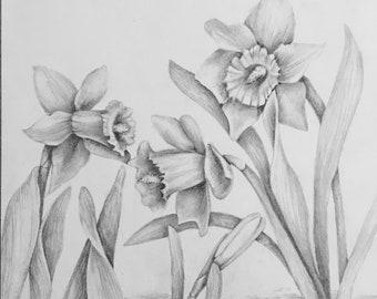 Daffodils, original pencil drawing of daffodil flowers