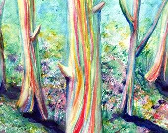 Rainbow Eucalyptus, eucalyptus deglupta, rainbow eucalyptus art, original watercolors, watercolor paintings, Hawaii art, Hawaiian art, Kauai