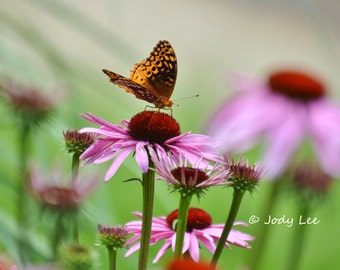 Butterfly Wall Art, Purple Pink Cone Flower, Butterfly Photograph, Nature ,Home Decor, Floral