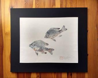 Spawning Bluegill Original Gyotaku