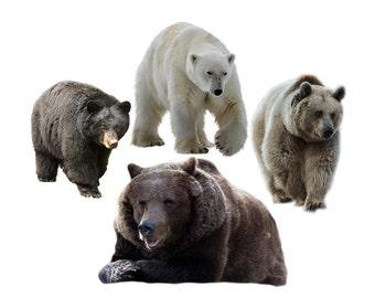 Bear overlay photo animal photoshop png