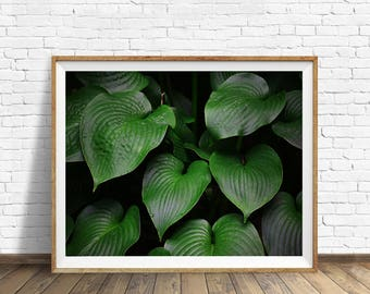green Plant art print, tropical leaves wall art, botanical wall decor, nature photography, minimal decor, leaf photography, digital download