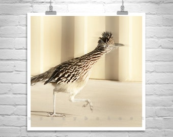 Roadrunner Bird Photography, Desert Roadrunner Art, Arizona Roadrunner Picture, Bird Decor, Bird Art, Birder Gift, Bird Print, Arizona Gift