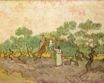 Vincent van Gogh: Women Picking Olives. Fine Art Print/Poster. (004193)