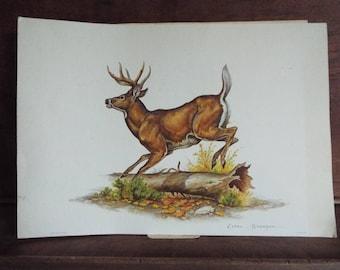 Vintage Clark Bronson Deer Buck wildlife print, 11x14