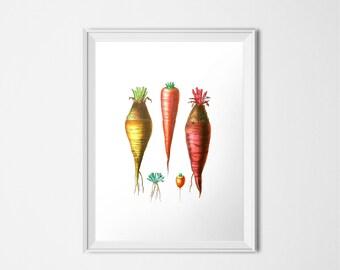 Carrot Print, Vintage Botanical Print, Vegetable Print, INSTANT DOWNLOAD, Printable Art, Kitchen Decor, Food Art, Orange Print Illustration
