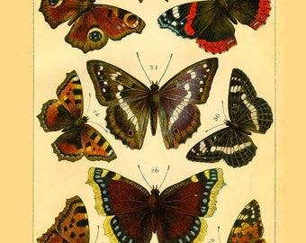 Butterflies ~ Butterfly Collection ~ Wildlife lithograph print ~ Vintage butterfly ~  Den Art, Wall Art, Butterfly decoration