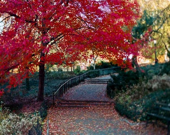 Red Tree in Central Park Print, Fall in New York Photography Large Wall Art, NYC Art -  Wall Decor