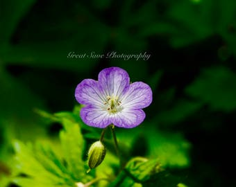 Purple Veins, Photography, Home Decor