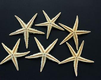 5 Natural Starfish (2.5-3.5in), beach wedding decor, starfish decor, bulk starfish, beach crafts, beach decor, terrariums, tan starfish