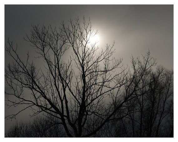 Autumn decor, Photography, Fine art print, foggy landscape, 5x7, 8x10, grey with sunlight