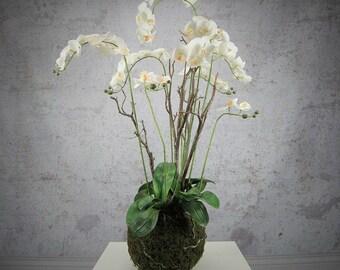 Large Phalaenopsis Orchid 65-67cm