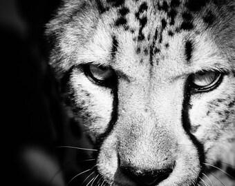 Cheetah Fine Art - Black and White Wildlife Photography - Monochrome Wall Decor -  Animal Home Decor