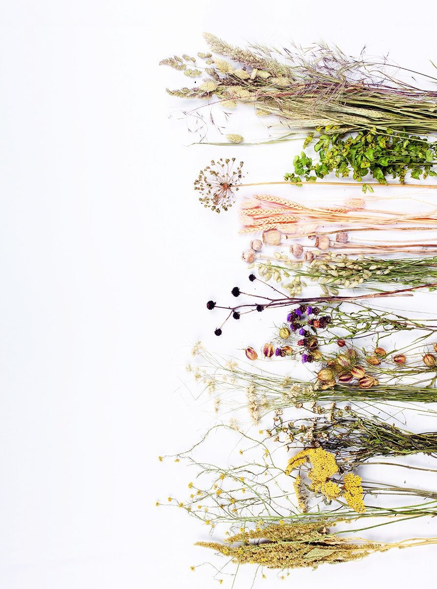 Dried flower varieties to use in this DIY project