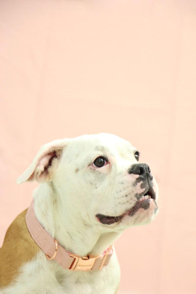 Blush dog collar with rose gold hardware from PRUNKHUND