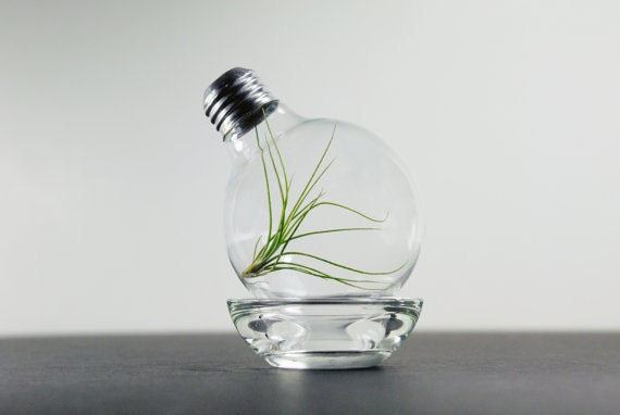 terrariumbulb