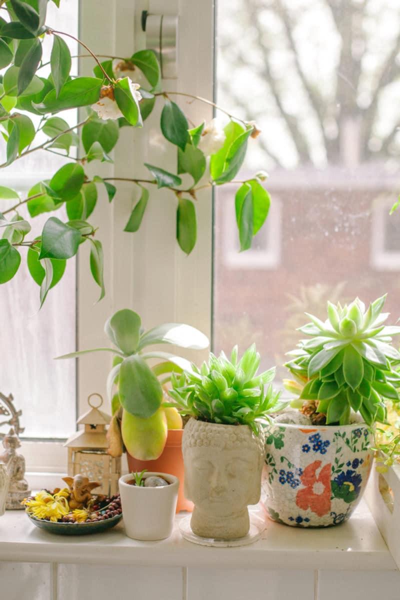 Ingrid's plant-lined window ledge