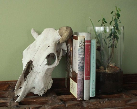 highdesertdrygoods-cow-skull