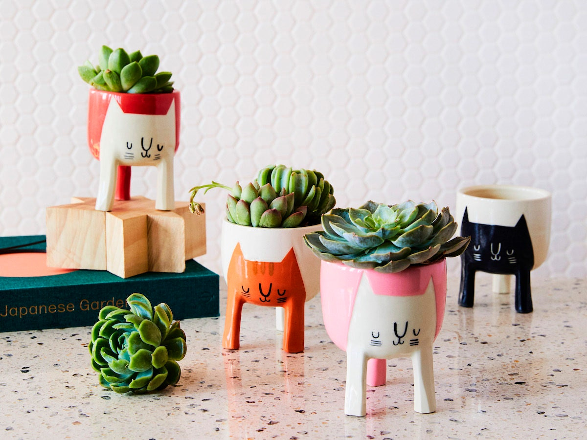 An assortment of succulent planters painted with colorful cat faces.