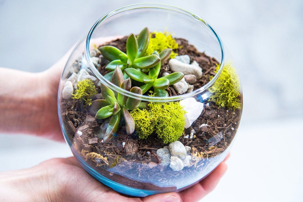 Hands holding a glass terrarium with succulents inside