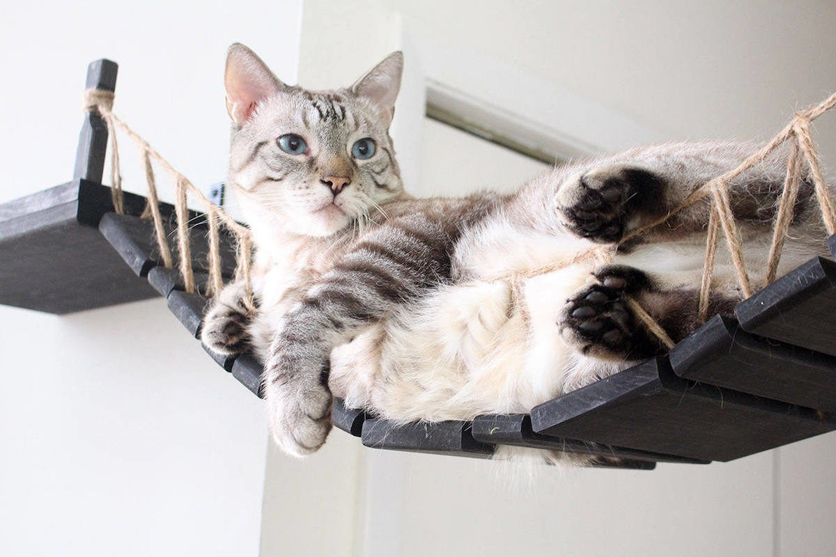 A cat lounges in a roped cat bridge from CatastrophiCreations