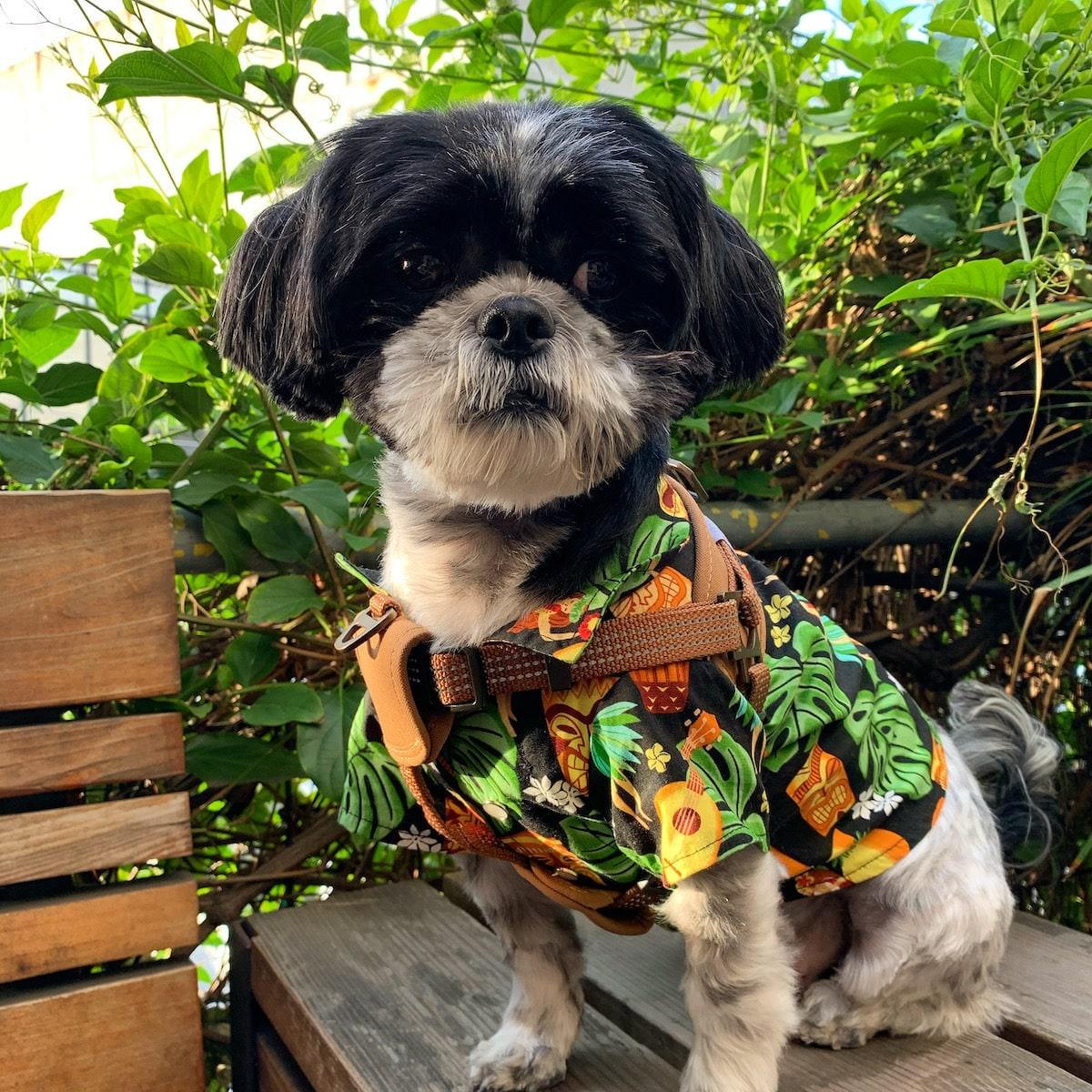 Dog Hawaiian shirt from Chompers & Sons