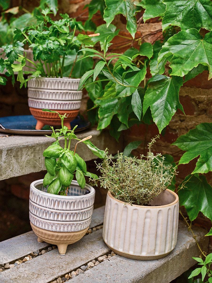 Three ceramic planters that contain herbs