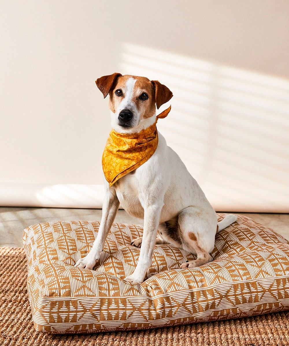 A dog models the bandanas and dog beds from Backup Design.