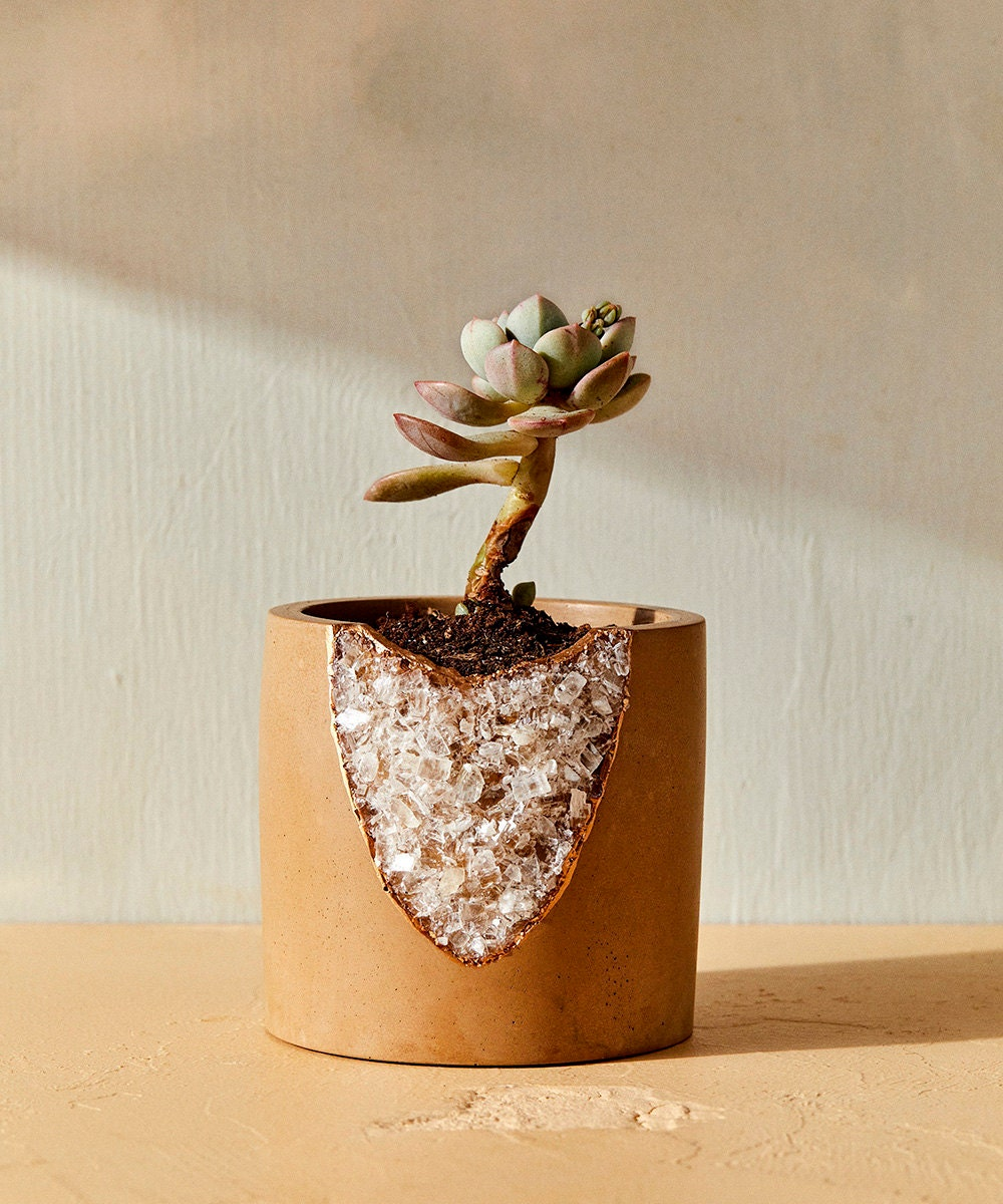 A succulent grows out of a crystal-studded planter.