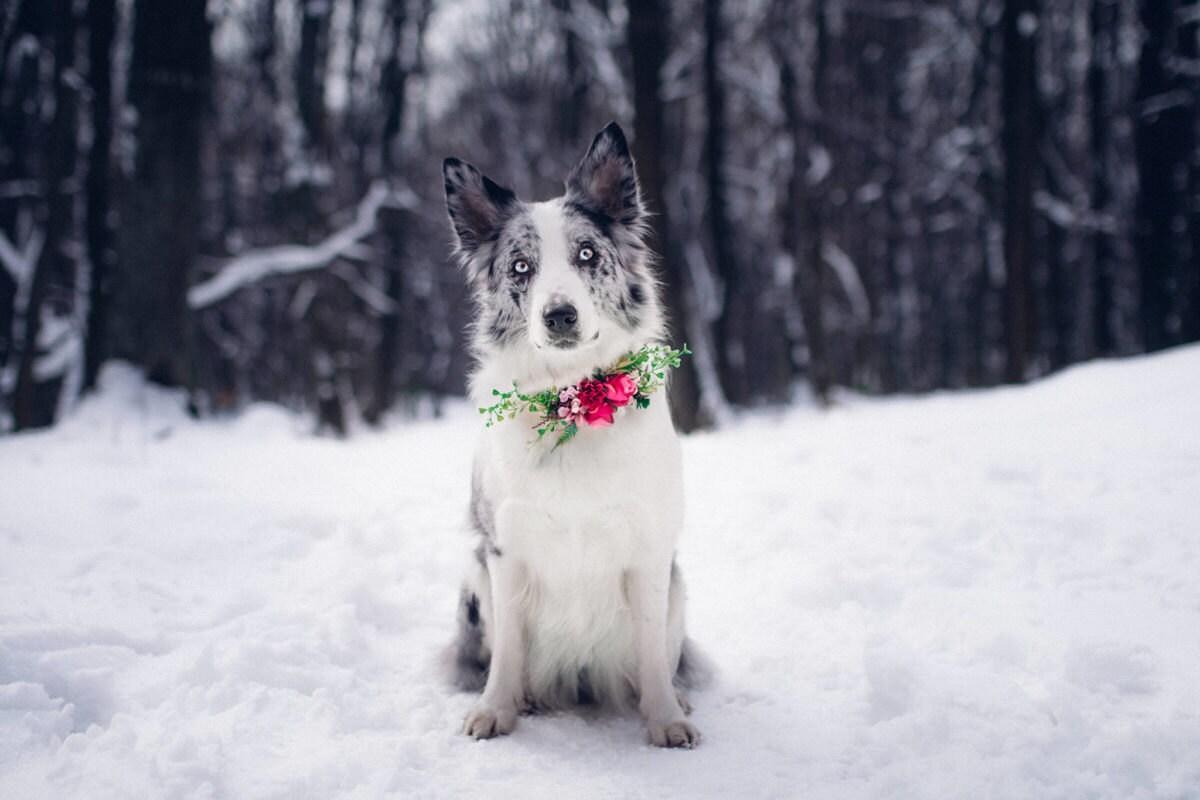 A floral dog collar from Magaela