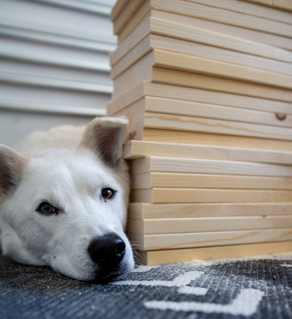 Scout rests his head after quality testing a stack of wood.