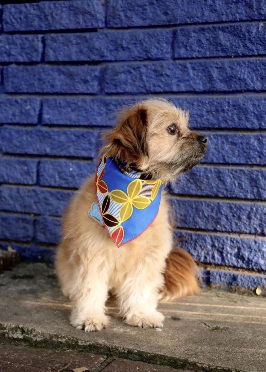 African wax print dog bandana from GabeJade
