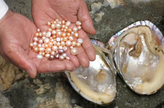 Pearls_from_Chinese_freshwater_mussel.jpg