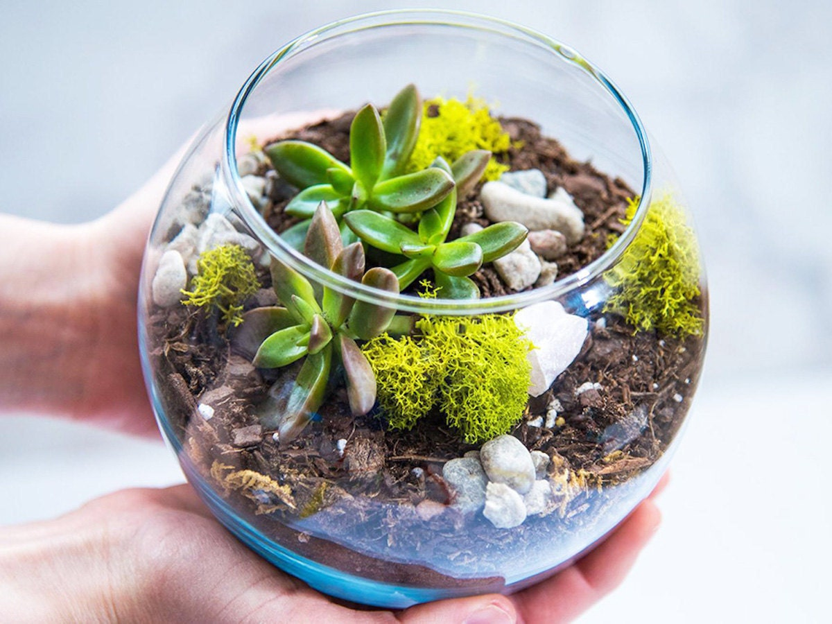 DIY tabletop terrarium for Father's Day