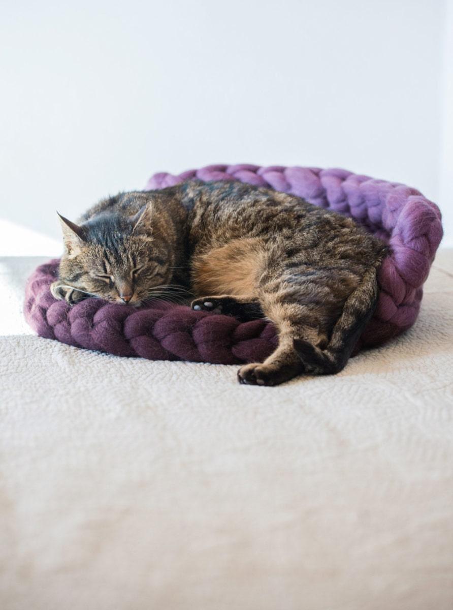 a cozy handmade cat bed