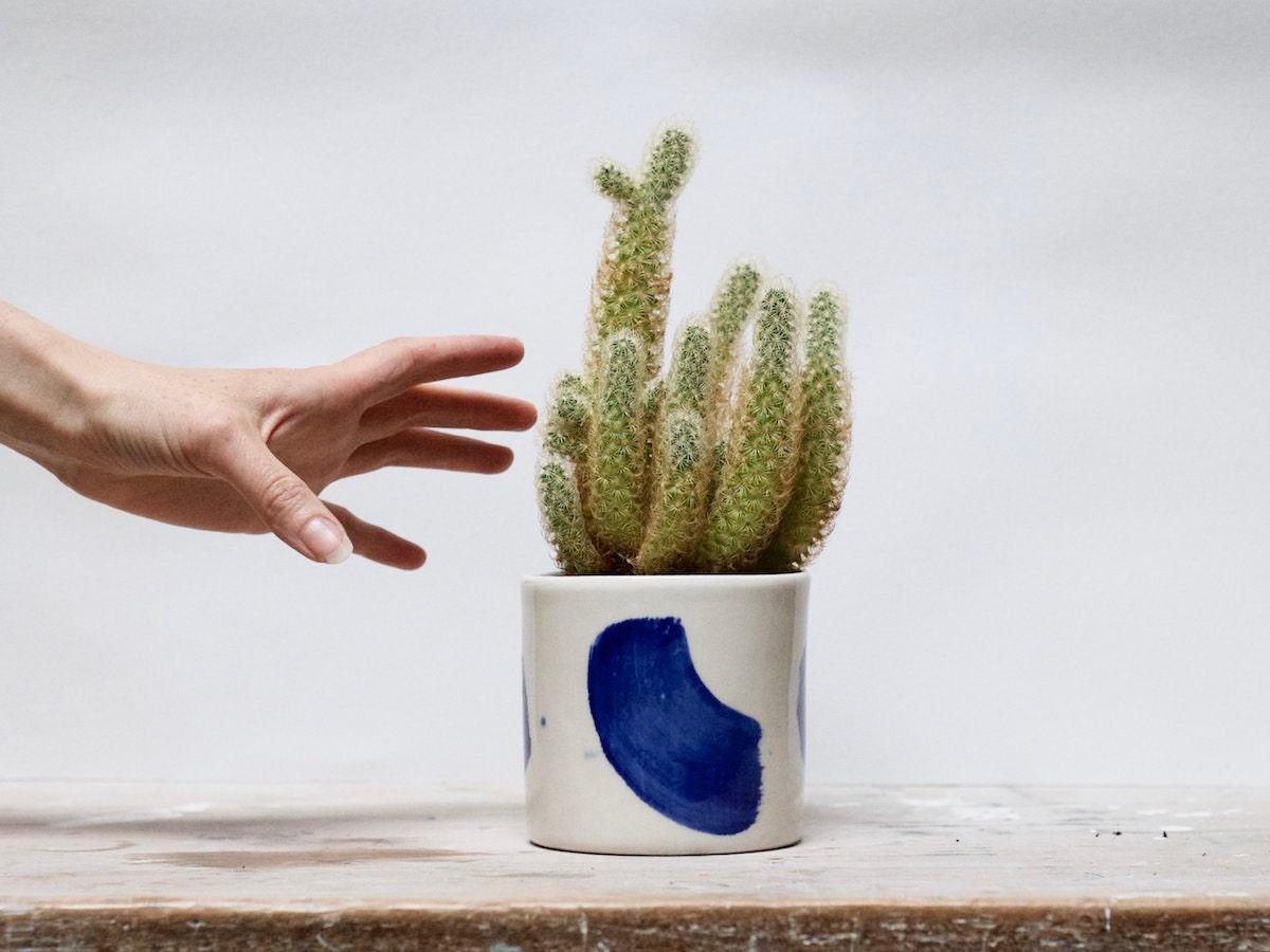 Handmade porcelain planter from Buchlyvie Pottery holding a cactus