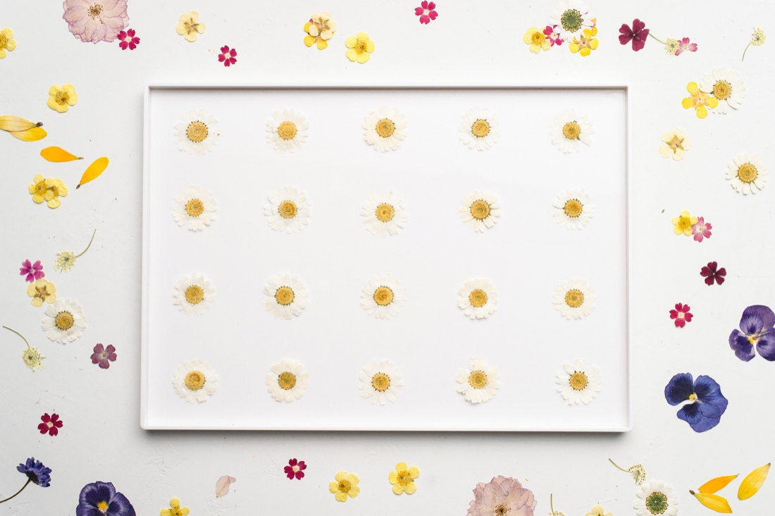 One option for a potential floral composition, with daisies arranged in a grid-like pattern
