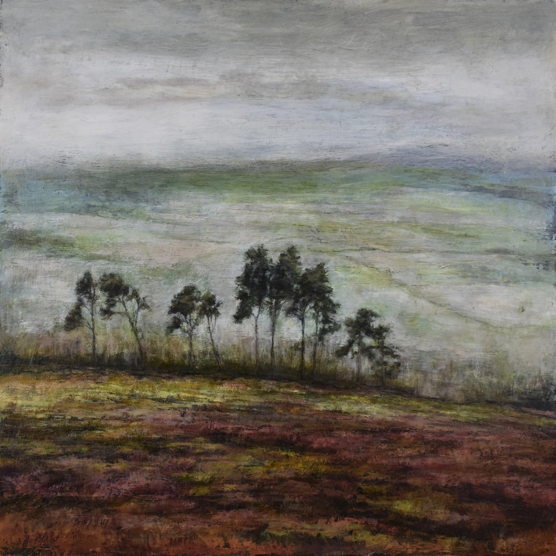 Scots Pine trees in Eskdale