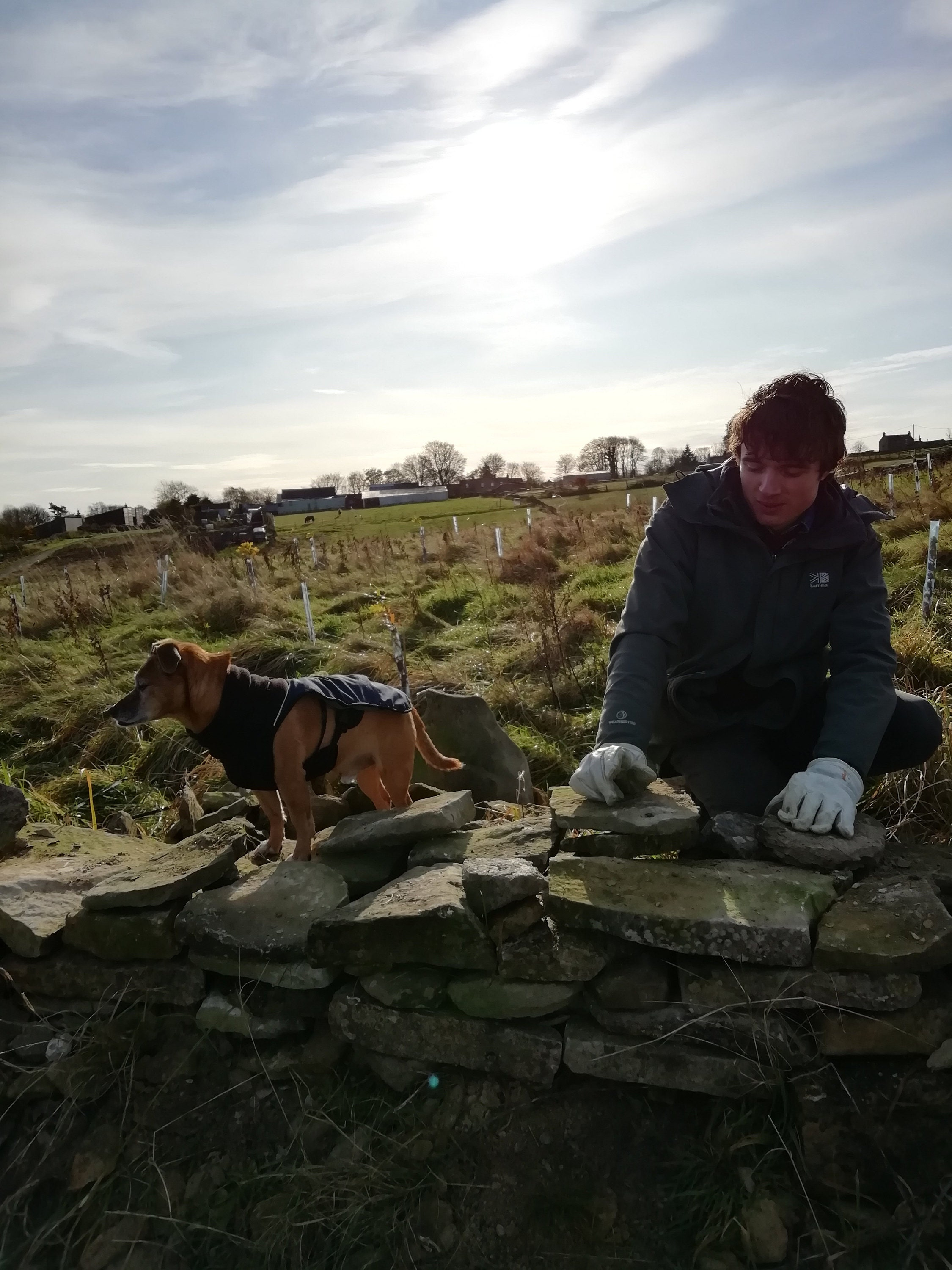 My son repairing a dry stone wall. Always cold in Cold Kirby!