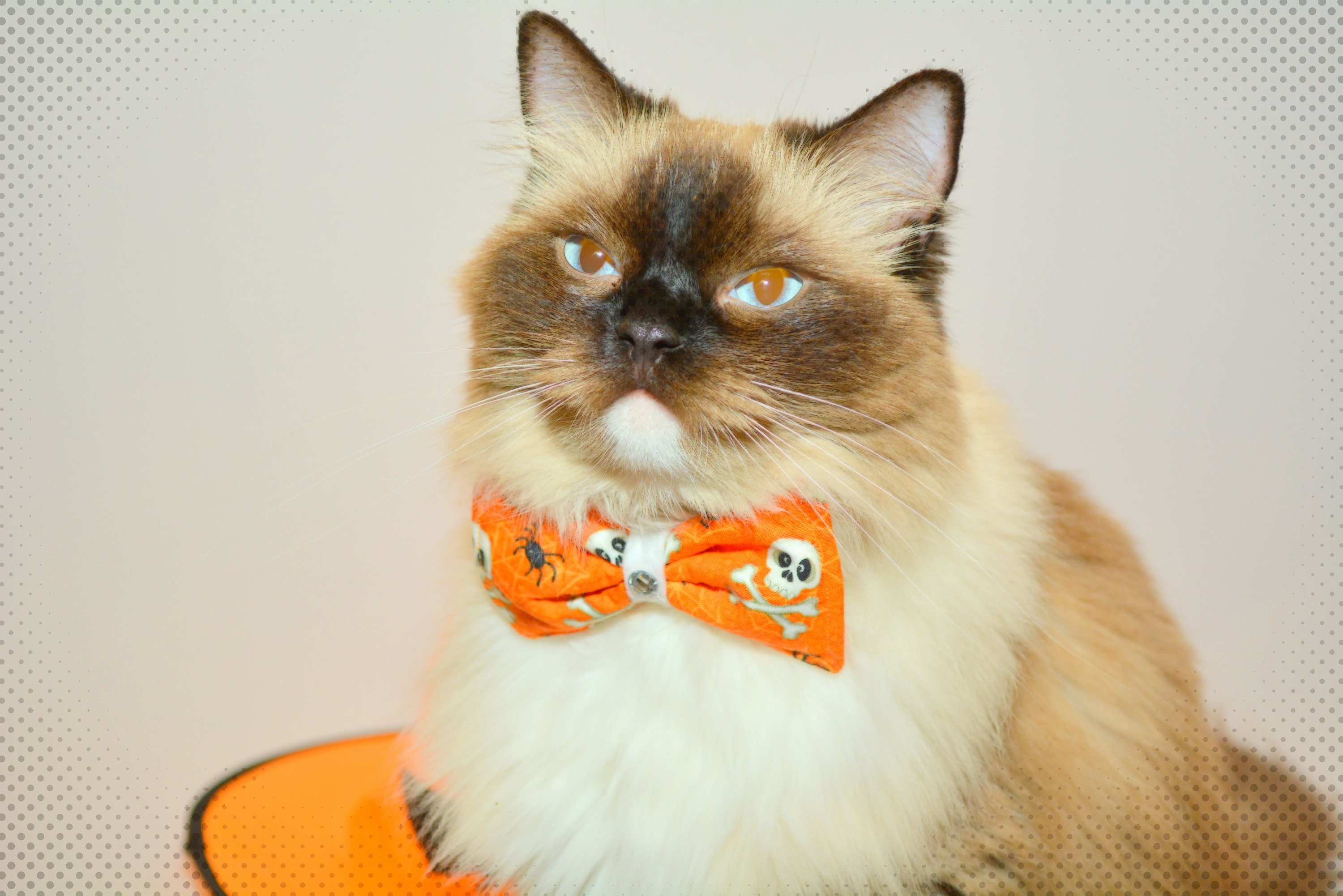 Halloween bow tie for cat