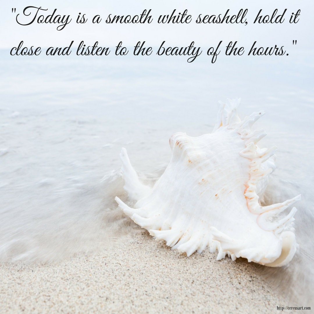 Today is a smooth white seashell, hold it close and listen to the beauty of the hours.