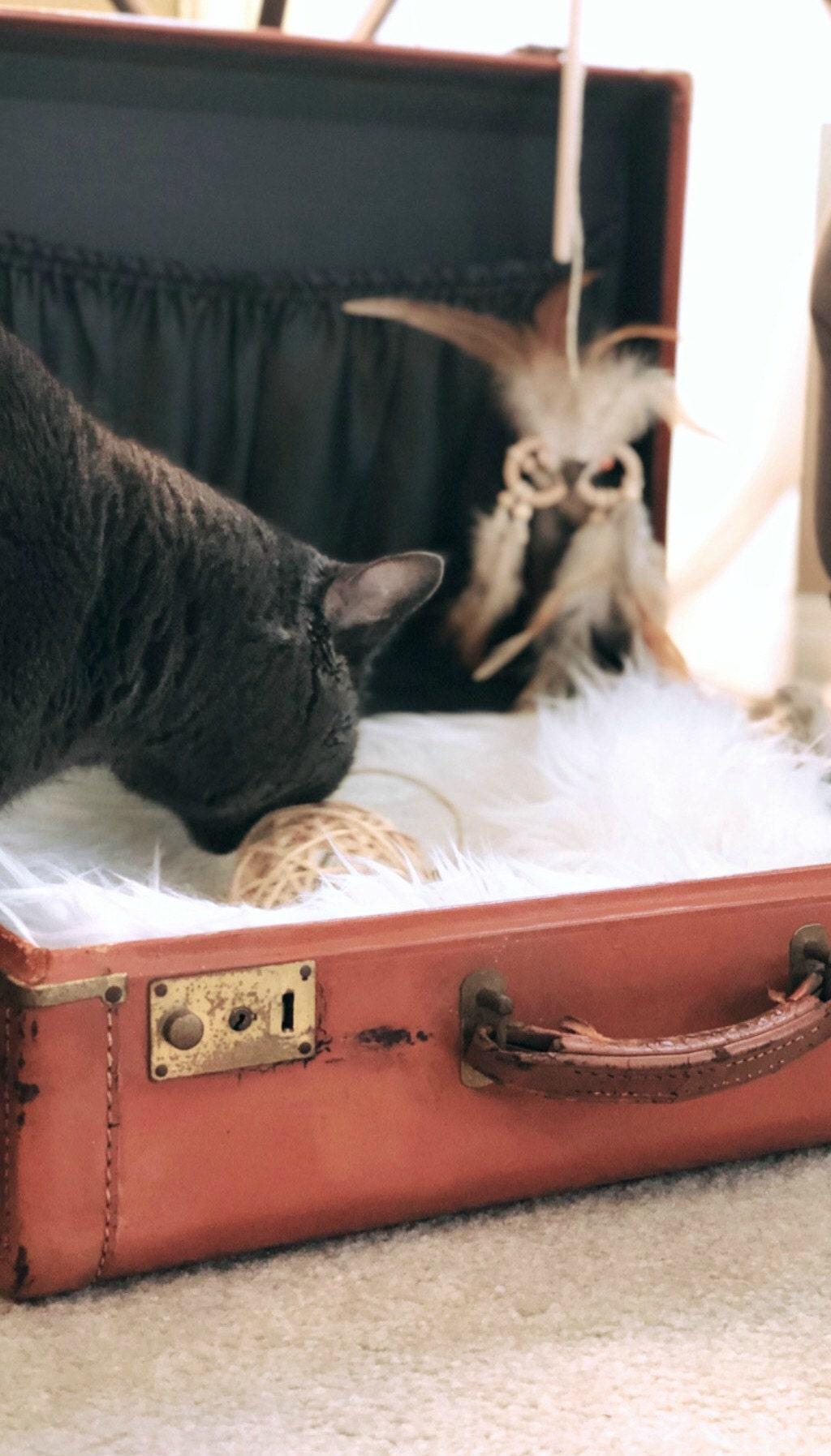 vintage suitcase cat bed